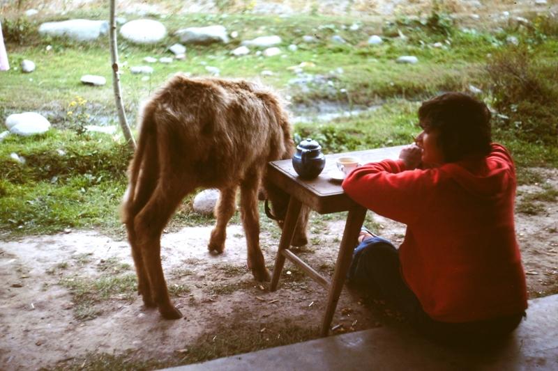 Swat Valley – Kalam – Erna & calf