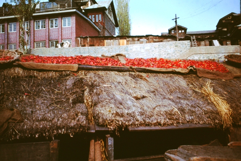 Srinagar – drying chillies