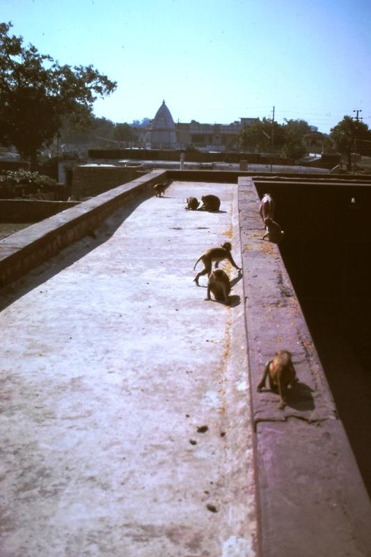 Varanasi – Monkey Temple