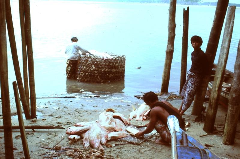 Descaling ikan merah