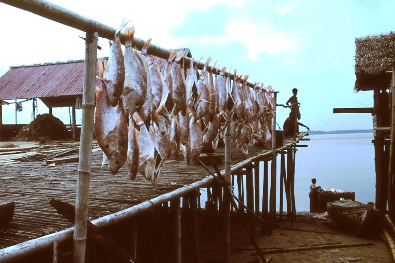 Drying ikan merah