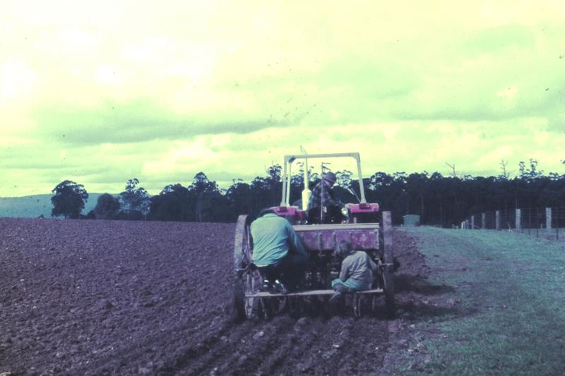 Kinglake – Planting spuds