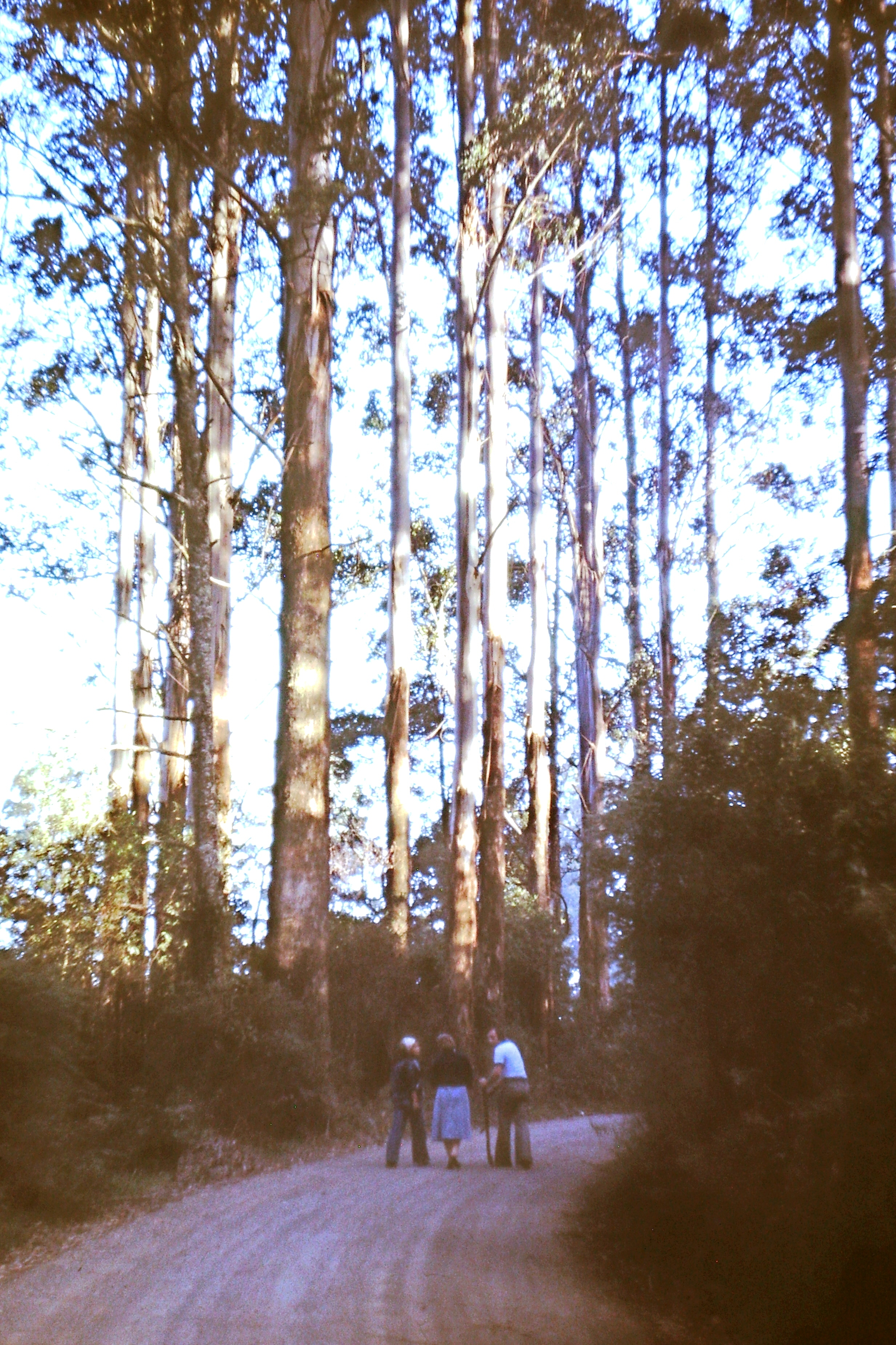 Candle gums