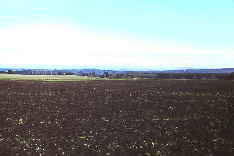 Barren tulip fields in the Dandenongs