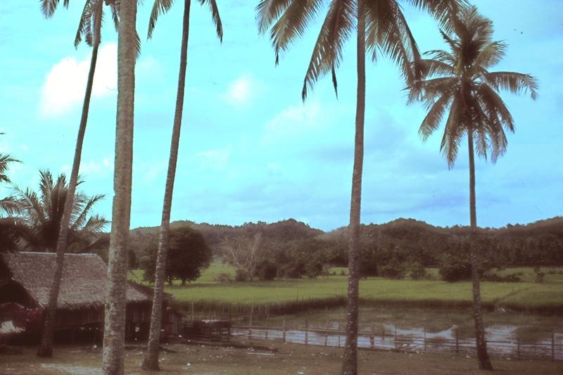 East Coast - Rice paddies
