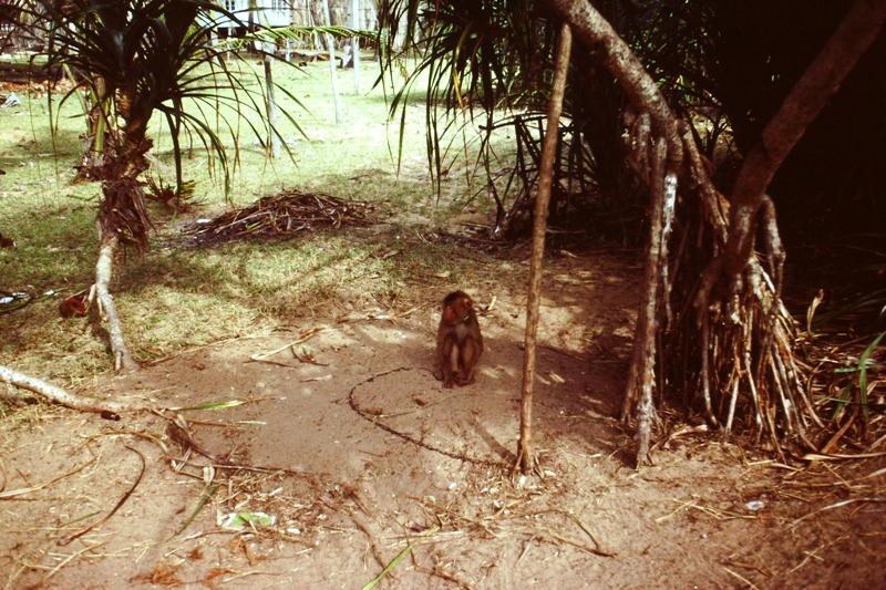 East Coast – Coconut collector