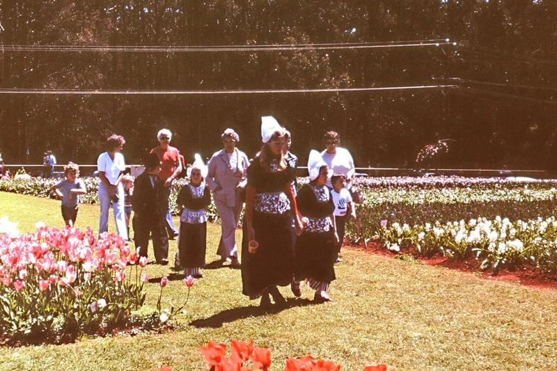 Dandenongs – Tulip Festival